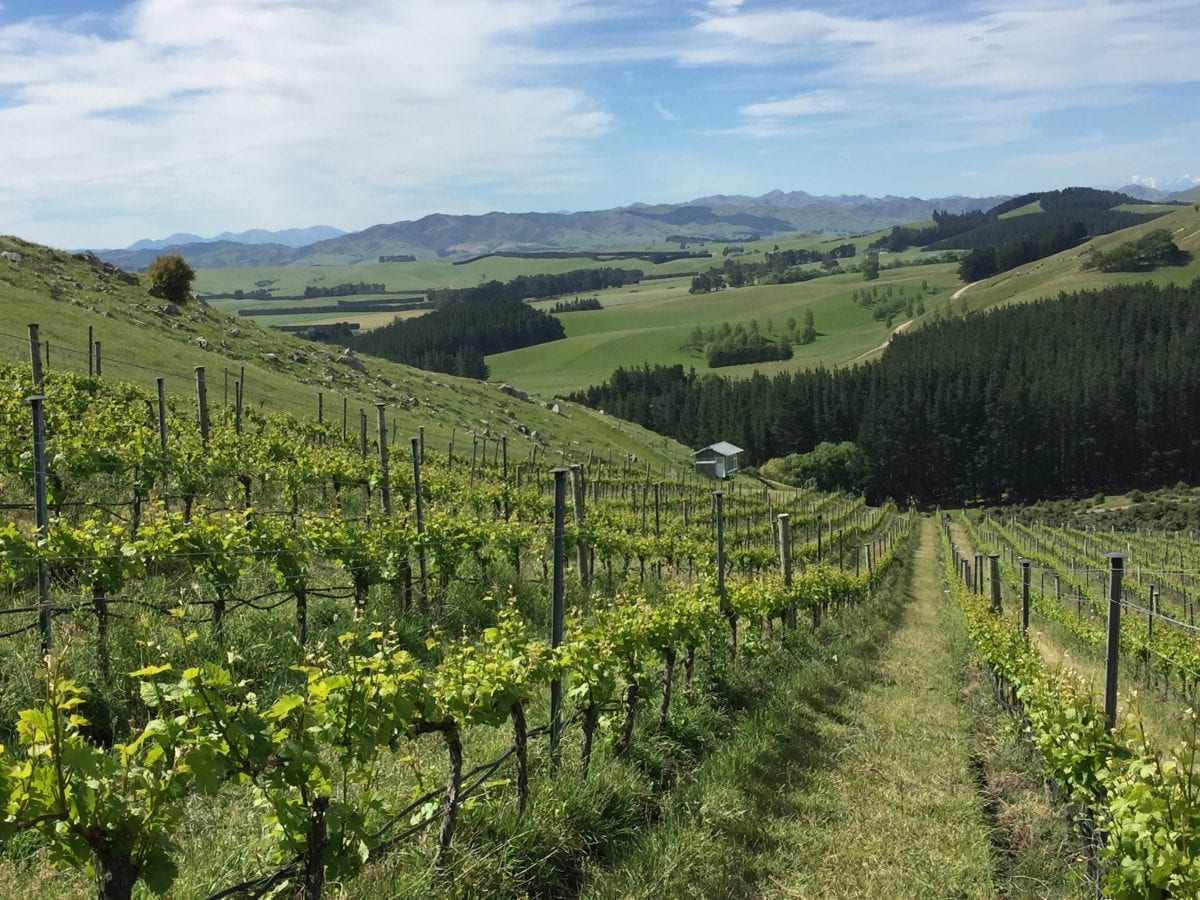 DAMSTEEP PINOT VINEYARD